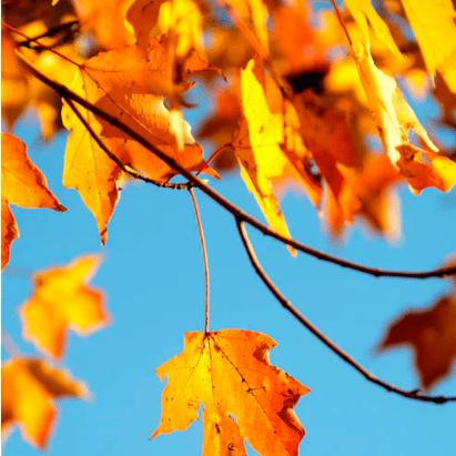 Fall Tree Care: DIY Autumn Maintenance Tips Near Lynnwood