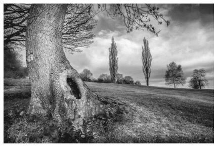 tree trunk holes